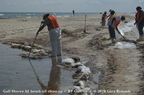 Bp Oil Spill Clean Up Animals Gulf oil spill photos
