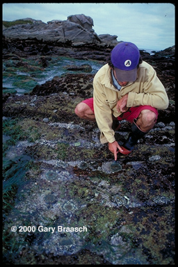 Marine Biologist Rafe Sagarine, Monterey California