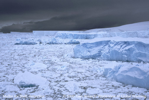 Muller Ice Shelf calving rapidly